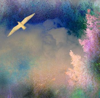 a bird soaring