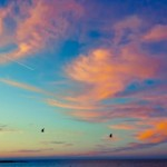 Birds fly in front of a gorgeous sunrise