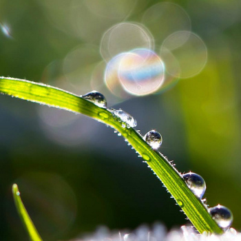 One perfectly focused drop of water on a blade of grass, everything else fading into the background. Just like the focus and clarity I want for you in your life.